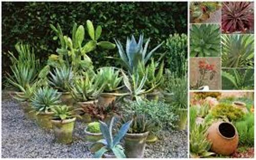 How to Arrange Outdoor Plants in Pots Ideas