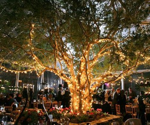 festive Outdoor Trees with Lights