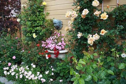 Modern Garden with Flowers