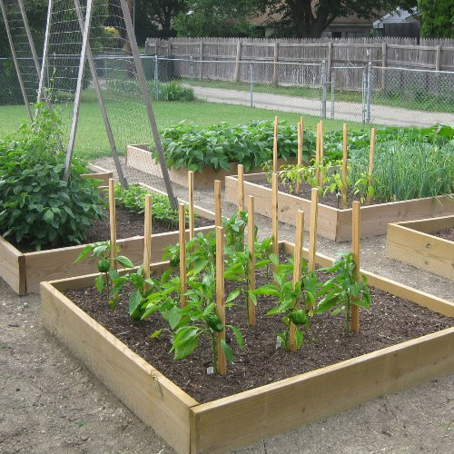 Charming Vegetable Garden