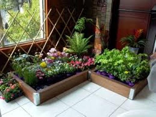 Garden Indoor