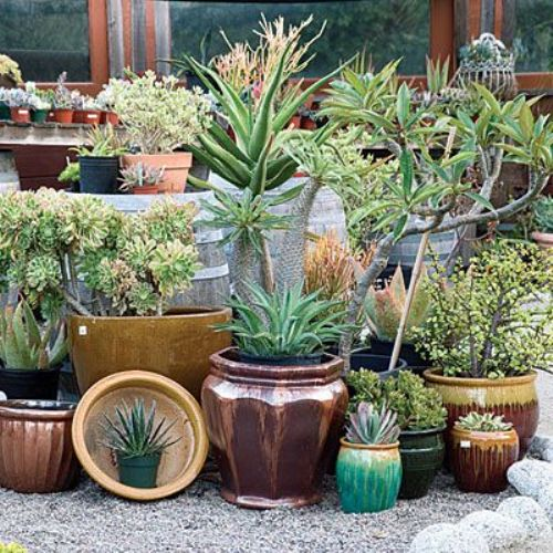How to Arrange Pots in a Small Garden