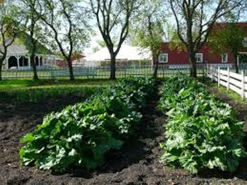 Nice Vegetable Garden In Your Backyard