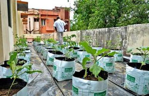 How to make vegetable garden on terrace 5 ideas for green for Terrace vegetable garden kerala
