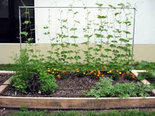 Superb Vegetable Garden In Your Backyard