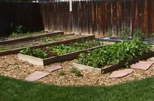 Vegetable Garden Bed Pic