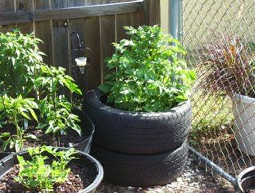 Plant Potatoes in Tires