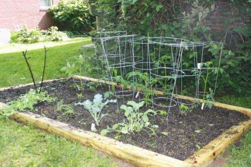 Simple Vegetable Garden in Clay Soil