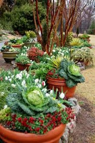 Sweet Vegetable Garden in Clay Soil