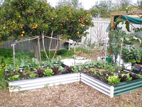 Vegetable Garden in Small Spaces