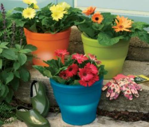 How to Arrange Outdoor Flower Pots in Colors
