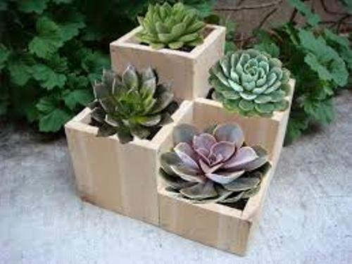 How to Arrange Outdoor Flower Pots in Wooden Pots