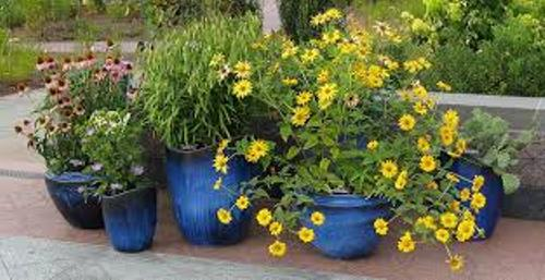 How to Arrange Outdoor Flower Pots