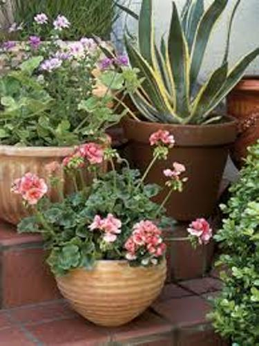 How to Arrange Outdoor Plants in Pots Image