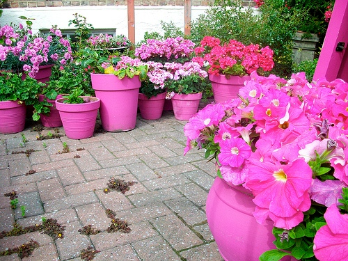 Outdoor Flower Pots in Pink