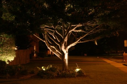 How to Decorate Outdoor Trees with Lights