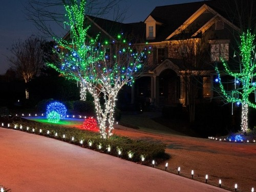 Nice Outdoor Trees with Lights