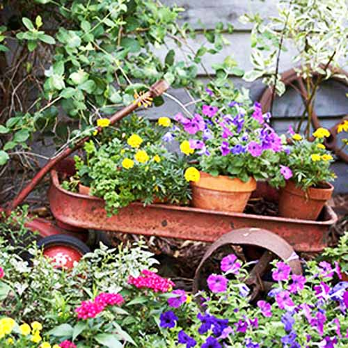 How to Decorate Garden with Flowers