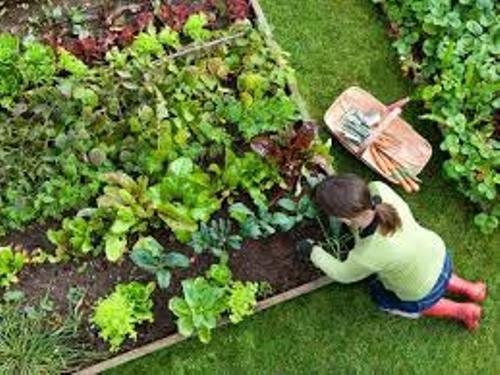 Amazing Vegetable Garden
