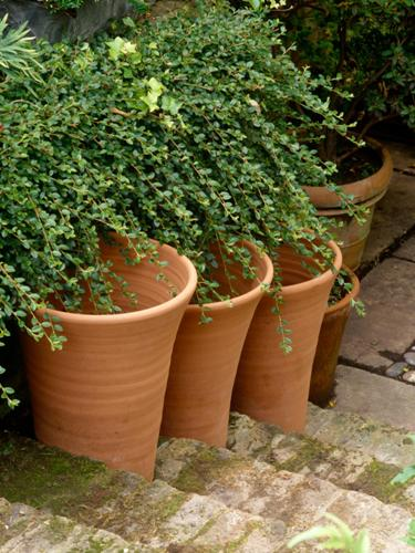 Clay Pots in a Small Garden