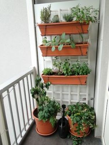 Cute Vegetable Garden in an Apartment
