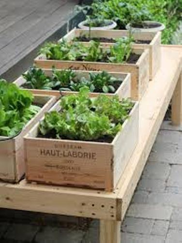 Excellent Vegetable Garden Box