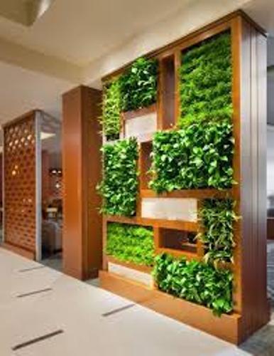 Garden Indoor Pictures