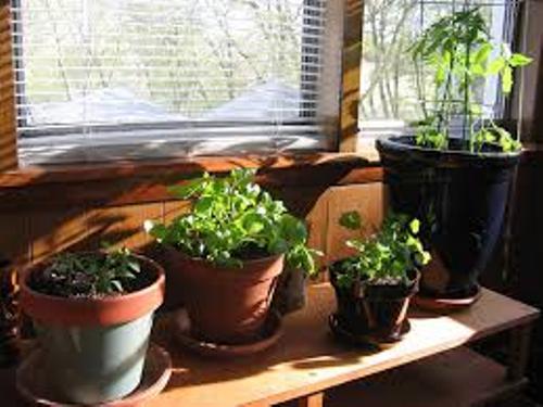 Garden Indoor with Pots