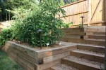How to Make Vegetable Garden on Terrace: 5 Ideas for Green Look