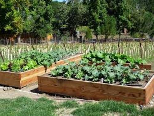 How to Make Your Own Vegetable Garden Box