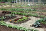 How To Make Your Own Vegetable Garden Soil: 5 Guides For Inexpensive Soil
