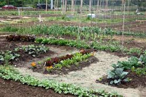 How to Make Your Own Vegetable Garden Soil