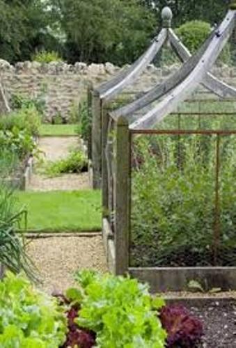 Impressive Vegetable Garden