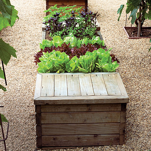 Perfect Vegetable Garden Box