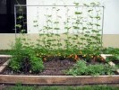 How To Start A Vegetable Garden In Your Backyard: 5 Tips For Functional Garden Design