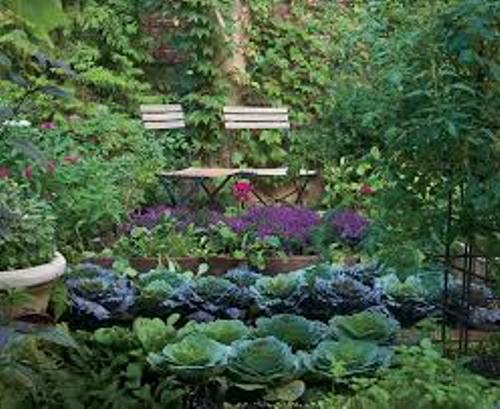 Vegetable Garden Beautiful