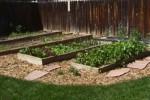 How To Arrange Vegetable Garden Beds: 5 Ways For Beautiful Garden