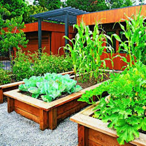 Vegetable Garden In Your Backyard