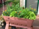 How to Start a Vegetable Garden in Pots: 5 Ideas For Perfect Vegetable Garden