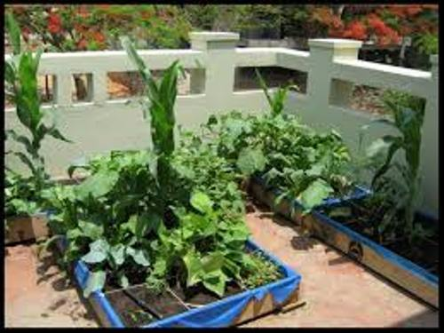 Vegetable Garden on Terrace