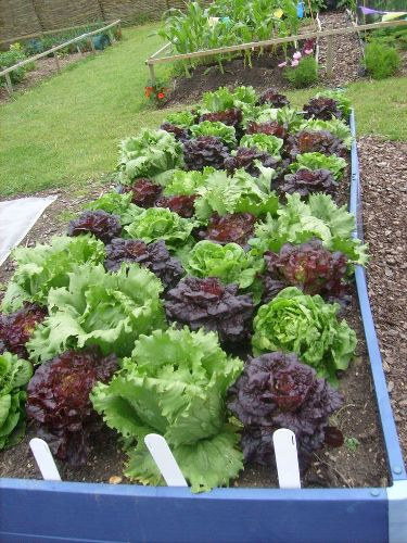 Easy Vegetable Garden in Clay Soil