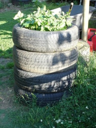 How To Grow Potatoes In Straw And Tires 5 Tips For