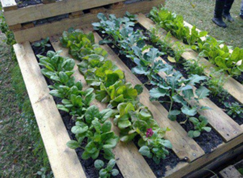 How to Make a Vegetable Garden in Small Spaces