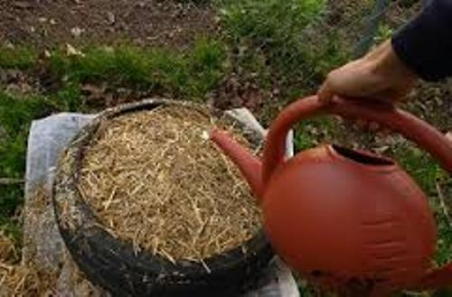 Potatoes in Straw and Tires Images