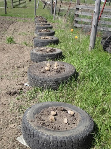 Potatoes in Tires